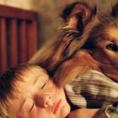 Які хвороби собак небезпечні для людини?