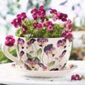 Які квіти дарувати на свято 8 березня