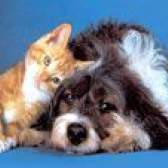 Кішки і собаки. Як ужитися двом давнім суперникам?