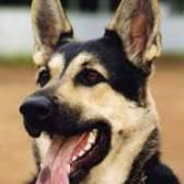 Прийоми виховання і дресирування собак
