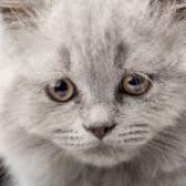 Блювота у кішки