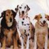 Вибір породи собаки