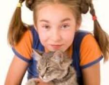 Алергія на кішок у дітей: симптоми та лікування алергії на шерсть кішок у дітей