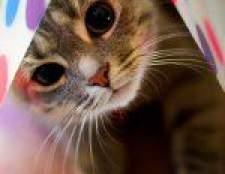 Алергія у кішок