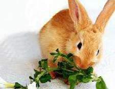Чим годувати декоративного кролика?