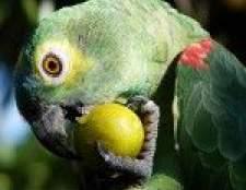Чим годувати папугу?
