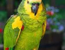 І ще трохи про хвороби папуг