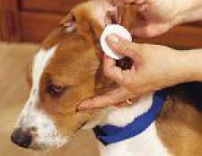 Як чистити вуха собакам і кішкам?