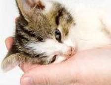 Як визначити, що ваша кішка захворіла?
