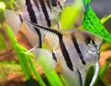 Як підібрати раціон для акваріумних рибок?