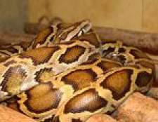 Як містити змію в домашніх умовах?