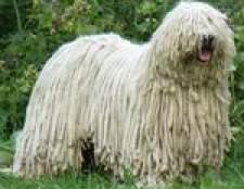 Комондор: угорська вівчарка