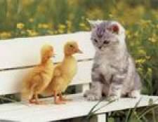 Кішки-мишки: кошеня, птиці та гризуни в будинку