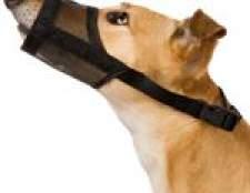 Лікування собак. Перша допомога