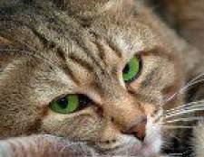Підшкірний кліщ у кішок