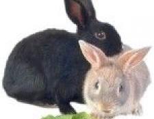 Породи декоративних кроликів