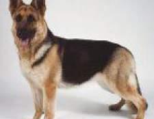 Породи собак: східноєвропейська вівчарка