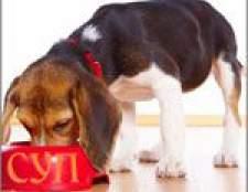 Переваги та недоліки сухих кормів для кішок і собак