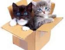 Тривалість життя кішок