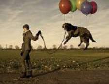 Прогулянка з собакою