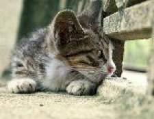 Пропала кішка: що робити?