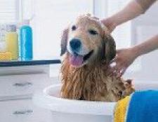 Шампунь для собак: як вибрати?