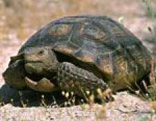Сухопутна черепаха