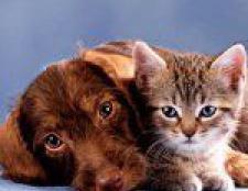 Догляд за шерстю кішок і собак