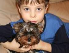 Догляд за собакою. Як залучити дитину?